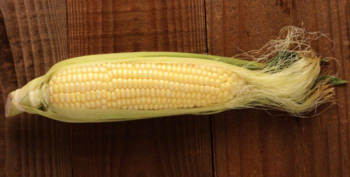 corn kevin